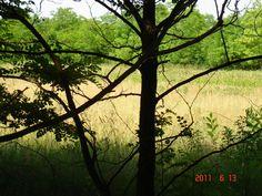 Hirdetésingyen - eladó termőföld, szántóföld, gyümölcsös, erdő apróhirdetés ingyenes feladása.