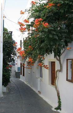 "~ Morning walk in Naxos ~ "" Στην Παρο και στη Ναξο το κορμακι μου ν'αραξω Ιn Paros and in Naxos I shall anchor my body…. "" photo by Stavros"