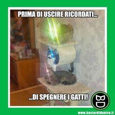 Cos'è, un #semaforo ? #bastardidentro #gatti #luce www.bastardidentro.it