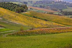 2013 Autumn events in Tuscany