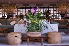 Arranjo floral  Flores e decoração: Bothanica Paulista Outdoor Furniture Sets, Outdoor Decor, Event Management, Event Venues, Natural Materials, Neutral Colors, Contemporary Style, Orchids, Sweet Home