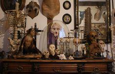taxidermy , curiosities , skull