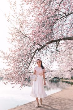 Gemi Cerchio leather sneakers outfit at Washington DC cherry blossoms Korean Spring Outfits, Spring Work Outfits, Spring Dresses, Cherry Blossom Outfit, Pink Blossom, Extra Petite Blog, Big Skirts, Pumpkin Costume, Queen Dress