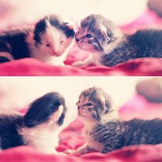 Kitty kisses.