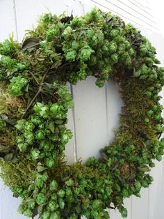Preserved Hops Wreath Wedding Wreath Natural by donnahubbard patricks day wreath Items similar to Moss Wreath Hops Wreath Natural Wreath Dried Wreath Saint Patrick's Day Wreath Green Wreath Wedding Decorations Front Door Wreath on Etsy Autumn Wreaths, Easter Wreaths, Wedding Wreaths, Wedding Decorations, Wedding Flowers, Autumn Decorations, Hops Plant, Succulent Plants, Succulents Garden