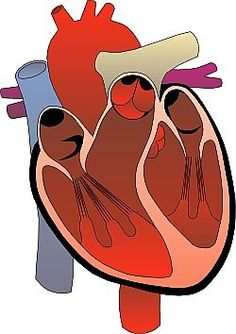 Heart attack aane ke lakshan heart attack reasons in hindi how to prevent clogged arteries ccuart Choice Image