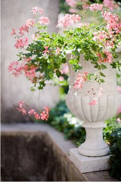 Scented geraniums in white urn Pink Garden, Dream Garden, Container Plants, Container Gardening, Container Flowers, Love Flowers, Beautiful Flowers, Shabby Flowers, Romantic Flowers