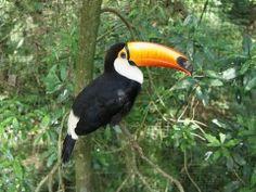 Cardápio para aves de estimação tem quantidades equilibradas de nutrientes