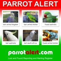 Report a lost parrot / bird or found parrot / bird with the most advanced global reporting / alerting register.