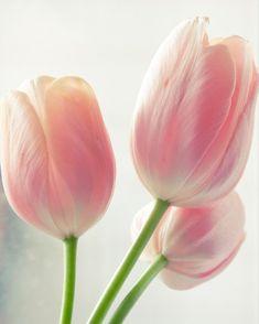Rosa Tulpen auf dem Küchentisch #Dekoration #Frühling