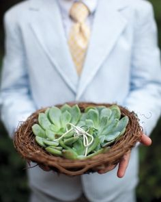 these wedding bands were tied to a succulent with twine and placed in a nest