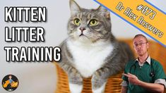 While many kittens will need little help, learning how to litter train a kitten is an important skill for any new kitten owner, and something to get right fast! Toilet Training, Potty Training, Training A Kitten, Pet Dogs, Dog Cat, Training Pads, Three Cats, Stress Causes, Little Kittens