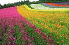 Rainbow on  Earth