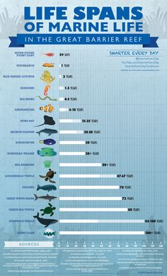 Life Spans of Marine Life in the Great Barrier Reef. A Smarter Every Day Infographic. 25% of all Marine life in our oceans live on coral reefs: the Catlin Seaview Survey http://catlinseaviewsurvey.com/gallery