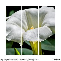 Big, Bright & Beautiful, White Datura Wall Art Triptych #art #flowers #datura #whiteflower #homedecor