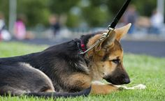 The good, the bad and the ugly about choke collars and how you can decide if it's best for you.   Canine Journal