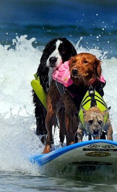 Dogs that surf.