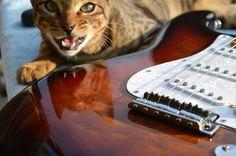 Tripp with a Belvoir Guitars Strat