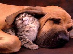 z- Kitten & Dog
