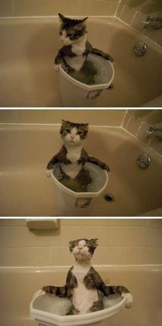 Kitty's bath time!