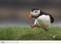Baby Puffin: Haters gonna hate. | Tube Blaster