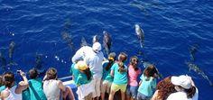 Excursiones marítimas en La Palma  El FANCY IIha sido construido expresamente para excursiones en alta mar en La Palma, y pertenece a los más seguros y cómodos de su tipo.Dos potentes motores Diesel, equipo de radio, balsa salvavidas, chalecos para adultos y niños, y una zodiak, garantizan una excursión divertida y despreocupada.