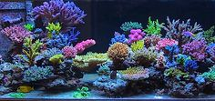 """Krzysztof Tryc is an experienced reef aquarist who has been in the """"Low Nutrient Zone"""" for over five years using various methods including Zeovit and Biope"""