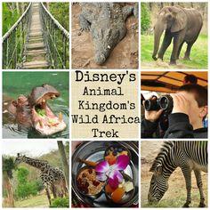 An amazing African adventure @ Disney's Animal Kingdom Wild African Trek http://mamato5blessings.com/?p=10391 #WDWBigfun