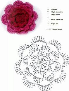 Rosa con schema