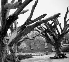 Ai Weiwei exhibition at RA London (preparation)