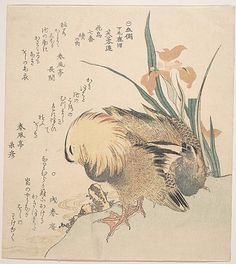 Pair of Mandarin Ducks and Iris Flowers  Kubo Shunman  (Japanese, 1757–1820)  Culture: Japan Medium: Polychrome woodblock print (surimono); ink and color on paper
