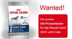 Royal Canin sucht 500 Produkttester!
