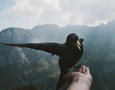A wild Bird - landscape photography by Regnumsaturni