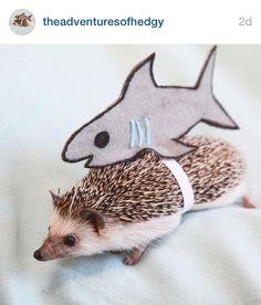 Rosa CADANIA Pet Hanging Bag Piccolo Rat Hamster Hedgehog Chinchilla Ferret Carrier Warm S