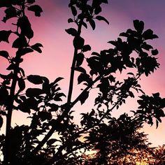 Aurinko laskee sun selkäsi taa se värjää sun hiuksesi punaisellaan.  #iltakävely #leppävaara #espoo #finland #luonto #auringonlasku #sunset #nature