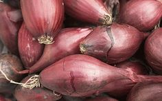 winter crop vegetables onions red
