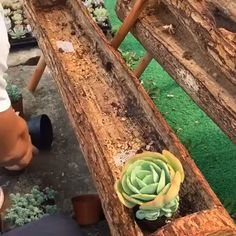 Garten Wish to know what are the most effective strategies for replanting succulents? Succulent Landscaping, Succulent Gardening, Garden Plants, Container Gardening, Indoor Plants, Garden Landscaping, Succulent Rock Garden, Planting Plants, Diy Garden