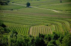 Goriska Brda wine region – 3 days in the vineyards | finding Malokoko