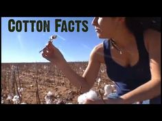 Cotton Facts & Fiber Facts - Information on different types of textile fibers: cotton http://www.pinterest.com/pin/47076758578181814/  http://www.pinterest.com/pin/47076758579839911/