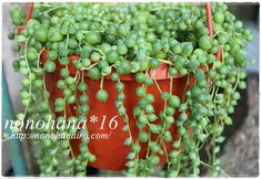 img_2186 Gardening, Fruit, Plants, Orchards, Veg Garden, Garden, The Fruit, Lawn And Garden, Plant