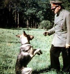 28 – Foto de Blondi, a pastor alemão de Hitler