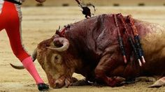 Stop the Bullfight - We demand the total abolition of this barbaric tradition