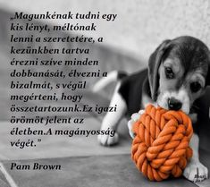 Nature Animals, Animals And Pets, Dog Quotes Love, Word 2, Dog Love, Cute Dogs, Tao, Qoutes, Wisdom
