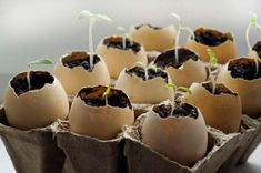 Mom refuses to throw eggshells away – after just one night her garden is more beautiful than ever Gardening, Egg Shells, Dream Garden, Permaculture, Caramel Apples, Easy Crafts, Succulents, Natt, Algarve