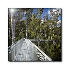 """AirWalk, Paths, Tahune Forest, Tasmania, Australia-AU01 DWA3861 - David Wall - 12 Inch Ceramic Tile by 3dRose. $22.99. Image applied to the top surface. Dimensions: 12"""" H x 12"""" W x 1/4"""" D. High gloss finish. Clean with mild detergent. Construction grade. Floor installation not recommended.. AirWalk, Paths, Tahune Forest, Tasmania, Australia-AU01 DWA3861 - David Wall Tile is great for a backsplash, countertop or as an accent. This commercial quality construction grade tile ..."""