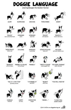 {Boogie Doggie Language} by lili.chin - great reference to understand dog's body language! :)