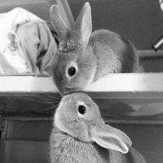 """goodnight honey"" 'goodnight bunny' ""love you"" 'love you too' somehow this reminds me of florence in our bunk beds!"