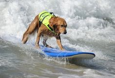 4th Annual Surf City Surf Dog
