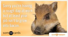 Sorry youre having a rough day at work but at least your job isnt to grow into bacon.