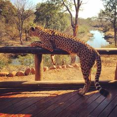 Photos of The Elephant Camp, Victoria Falls - Hotel Images - TripAdvisor